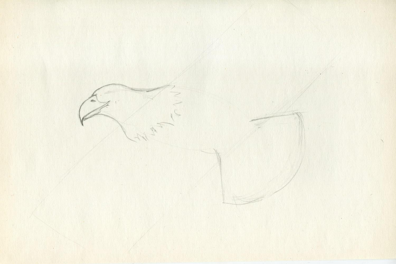 How to draw eagle pencil step by step? Step 2.