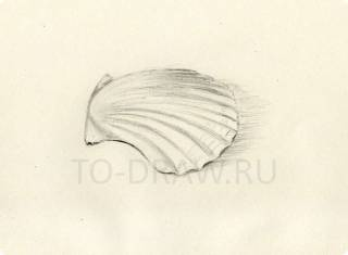 How to draw step by step shell pencil ?