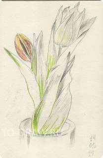 Drawing - tulips in a vase.