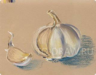 How to draw a pencil garlic in stages? Lessons pastel.