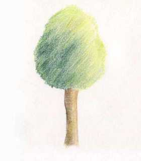 How to draw a tree - willow with colored pencils in stages ?