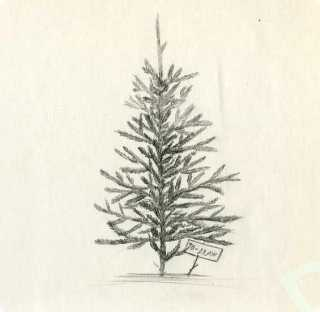 How to draw a Christmas tree with pencil step by step?