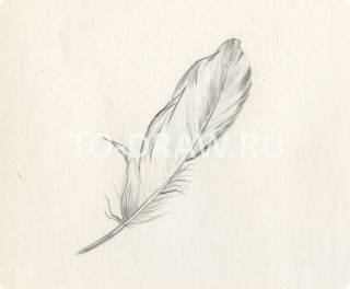 How to draw a bird feather pencil step by step?