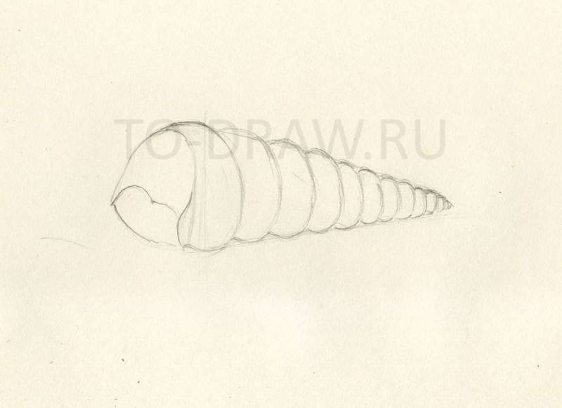 How to draw a seashell pencil stages? Step 3.